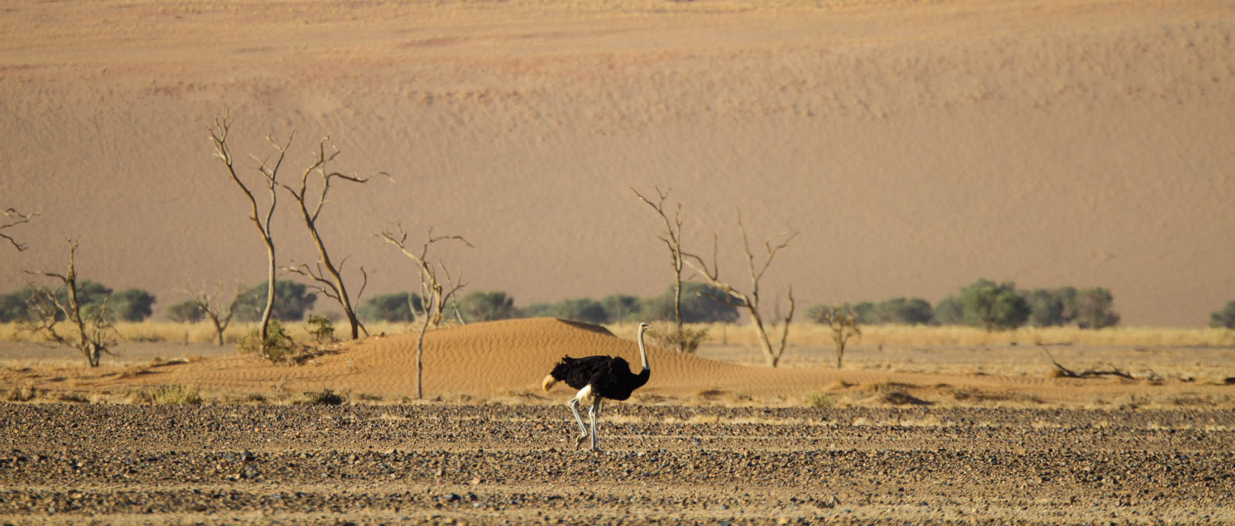 Namibie-2500px-05-IMG_0818-PANO
